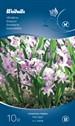 515730_varstjarna_pink_giant.tif