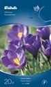 515850_crocus_vernus_flower_record.tif