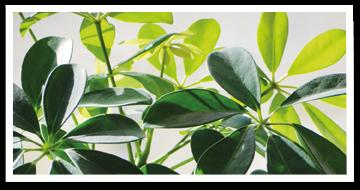 Weibulls - Näring till krukväxterna