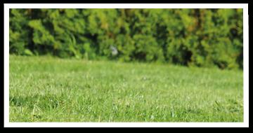 Weibulls - Gödsla gräsmattan