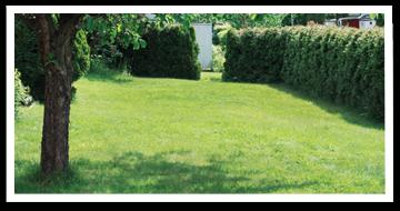 Weibulls - Grönaste gräsmattan