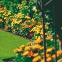 Weibulls - Så ny gräsmatta