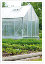 Weibulls - Odla i växthus