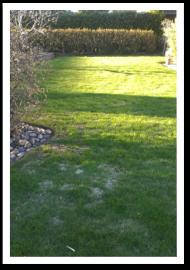 Weibulls - Sveriges grannaste gräsmatta, snömögel