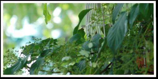 Weibulls - Trädgårdstema
