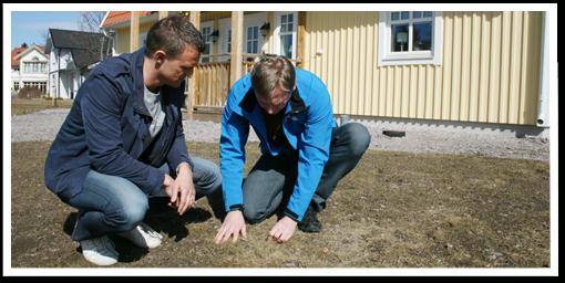 Sveriges grannaste gräsmatta - Bengt berättar