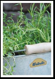 Weibulls - Odla kryddor i kruka