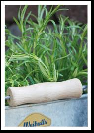 Weibulls - Odla kryddor, Rosmarin