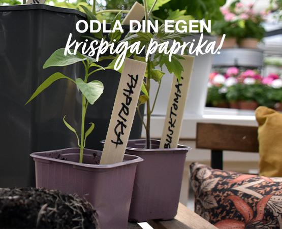 odla_paprika